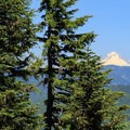 Obscured view of Mount Hood from the summit shoulder.- Henline Mountain