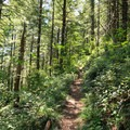The trail switches back several times through dense forest.- Henline Mountain