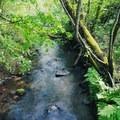 The creek runs alongside the trail.- Indian Creek Trail