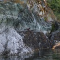 Keep a sharp eye out for wildlife around Brentwood Bay.- Brentwood Bay