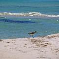 Birding on Gulf Islands National Seashore.- Gulf Islands National Seashore