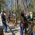 A group walks along the boardwalk around the spring.- Three Sisters Springs