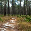 Sandy trails at Blackwater River State Park.- Blackwater River State Park
