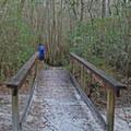 A wooden boardwalk in Blackwater River State Park.- Blackwater River State Park