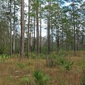 Forest at Blackwater River State Park.- Blackwater River State Park
