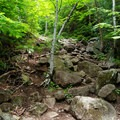The Short Trail is much steeper with large rocks and large stones serving as steps.- Mount Jo
