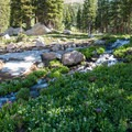 An enchanting stream with flowers above the lake.- Forest Lakes + Needle Eye Tunnel