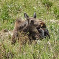 Moose are typically the only residents of the west side of the park off Trail Ridge Road.- Trail Ridge Road