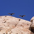 A pair of vultures scanning the foreboding landscape.- Grand Staircase-Escalante National Monument