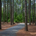 A campsite nestled within the tall pines.- Jane's Island State Park Campground