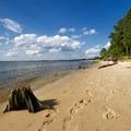An old tree stump on the beach.- Roaring Point