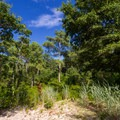 The forested/dunes area behind the sandy beach.- Roaring Point
