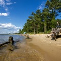 Various old trees on the shores of the beach.- Roaring Point