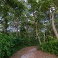 The trail leading to the beach.- Roaring Point