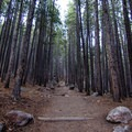 A trail along the Bierstadt Lake leads through a wooded section.- Bierstadt Lake Loop