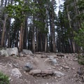A section of trail leads you into the forest.- Bierstadt Lake Loop