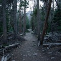 The loop around Bierstadt Lake is flat and well-maintained through fairly dense woods.- Bierstadt Lake Loop