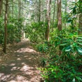 Park trail.- Rhododendron State Park