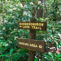 The Rhododendron Loop Trail is great for all ages.- Rhododendron State Park