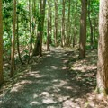Typical trail.- Rhododendron State Park