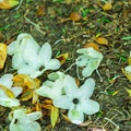 Petals on the ground.- Rhododendron State Park