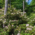 Rhododendron view from a bridge.- Rhododendron State Park