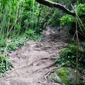The trail wastes no time climbing the steep ridge.- Pali Puka