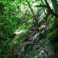 An alternate trail around the Shark's Fin leads straight to the summit ridge.- Pali Puka