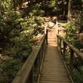 A wooden bridge connects a section of the trail.- Woodward Falls via Walk Jones Wildlife Sanctuary