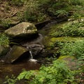 A small stream along the trail.- Woodward Falls via Walk Jones Wildlife Sanctuary