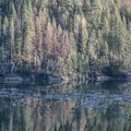 A wildfire burned some of the forest nearby within the last few years.- C.C. Cragin Reservoir