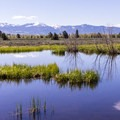 There are many pools very close to the road.- Moose-Teton Road Ponds