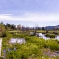 Moose-Teton pools.- Moose-Teton Road Ponds