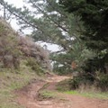 Glen Trail in Point Reyes National Seashore.- Bear Valley Trail to Wildcat Camp