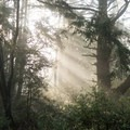 Bear Valley Trail in Point Reyes National Seashore.- Bear Valley Trail to Wildcat Camp