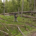 Heading through the thick lodgepole pine forest.- Lewis Lake to Shoshone Lake Loop