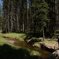 A couple of little stream crossing are to be expected on the Dogshead Trail.- Lewis Lake to Shoshone Lake Loop