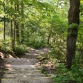 Steps leading down to the lower falls.- Chittenango Falls State Park
