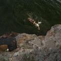 Enjoying a swim in Yellowstone Lake.- Storm Point