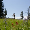 Indian paintbrush and lupine are abundant on the trail.- Specimen Ridge Trail