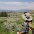 Looking for signs of wildlife on the forest edges.- Specimen Ridge Trail