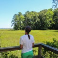 An overlook on Taskinas Creek Trail.- York River State Park