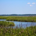 The rich marshlands.- York River State Park
