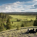 Little Firehole Meadows.- Firehole Meadows: Biscuit Basin to Freight Road