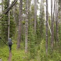 Hiking through thick lodgepole pine.- Firehole Meadows: Biscuit Basin to Freight Road