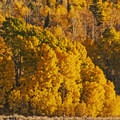 Late September is often the peak of color for many of the trees.- Weber Canyon Scenic Drive