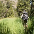Spur trail for backcountry campsite 1Y8.- Black Canyon of the Yellowstone