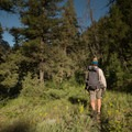 Hiking the Yellowstone River Trail.- Black Canyon of the Yellowstone