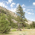 The Yellowstone River Trail.- Black Canyon of the Yellowstone