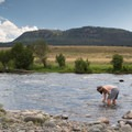 Cooling off in Hellroaring Creek.- Hellroaring Creek